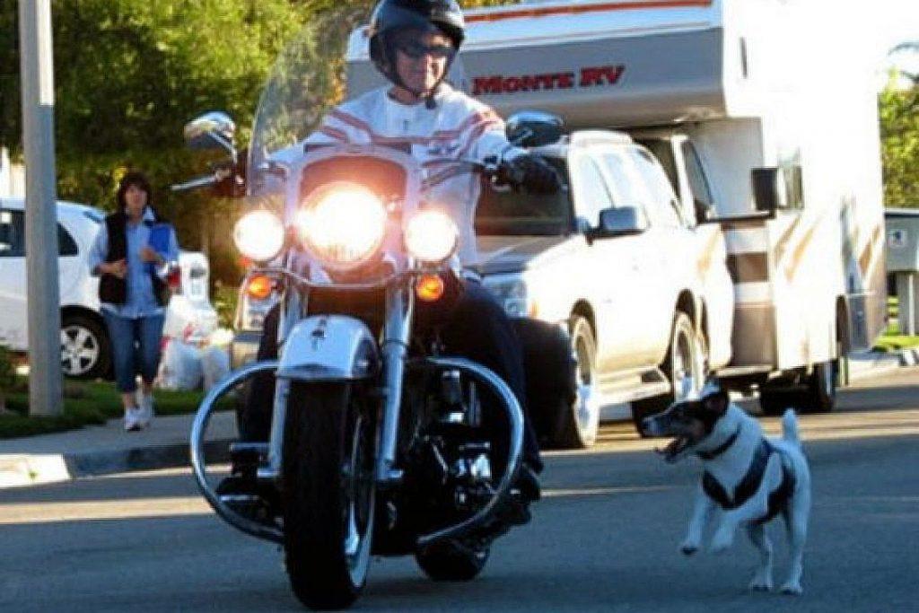 moto perro